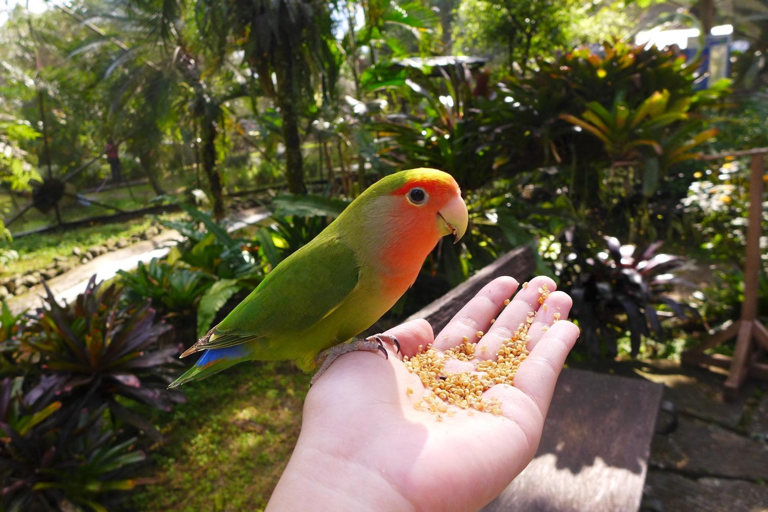 Malagos Garden Resort; Road Trip from Malaybalay to Davao; D.I.Y. Mindanao road trip; Malaybalay to Davao itinerary; Davao activities; What to do in Davao; Davao travel blog;