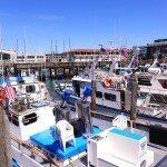 Ocean Meets Bay: Sights along San Francisco's Waters