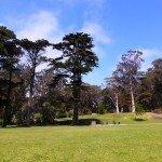 Enjoying Spring at the Golden Gate Park