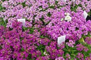 Spring Blooms, United States; Enjoying United States
